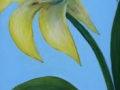 """Yellow Lily"" by Aileen Wheeler"