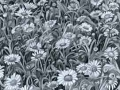 """""""Daises Galore"""" by Angelene Perry - Graphite A3"""
