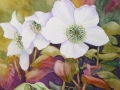 """""""Christmas roses"""" by Anne Whigham"""