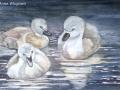 """Three muskateers"" by Anne Whigham"