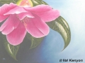 """Camellia"" by Val Kenyon"