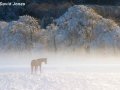 """Horse in Winter Mist"" by David Jones"