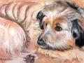 """""""Rob's dog"""" by Liz Allen"""