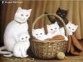 """My stray cat surprise"" by Margaret MacGregor"
