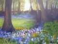 """Bluebell Bliss in Larbert Woods"" by Maureen McAlpine"