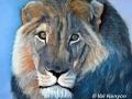 """""""Lion King (2)"""" by Val Kenyon"""
