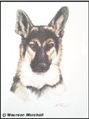 """German Shepherd"" by Maureen Marshall"