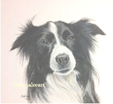 """""""Collie"""" by Galyna Lee"""