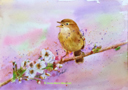 ''Singing Chiff Chaff'' by Anne-Marie Marshall