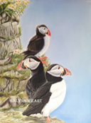 """Puffins"" by Galyna Lee"