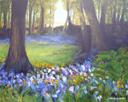 """Bluebell Bliss in Larbert Woods"" by Maureen McAlpine"