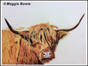 """Highland cow"" - by Maggie Bowie"